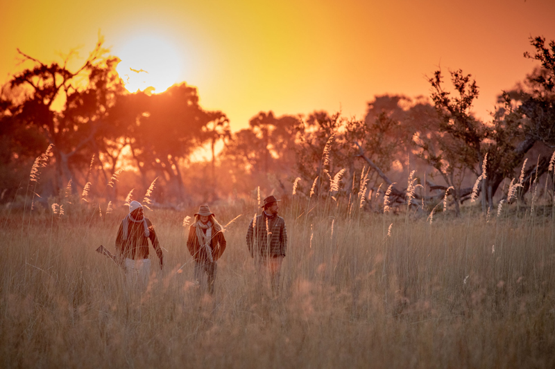 Walking safari and sunset
