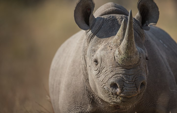 Black Rhino - James.jpg